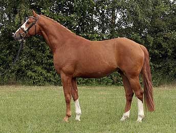 Reitsport dierstorf seminare for Exterieur beurteilung pferd